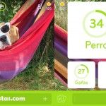 Imagen Perro en Hamaca | 94 por ciento