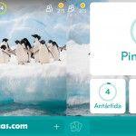 Imagen Pingüinos   94 por ciento