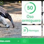 Imagen Oso Hormiguero | 94 por ciento